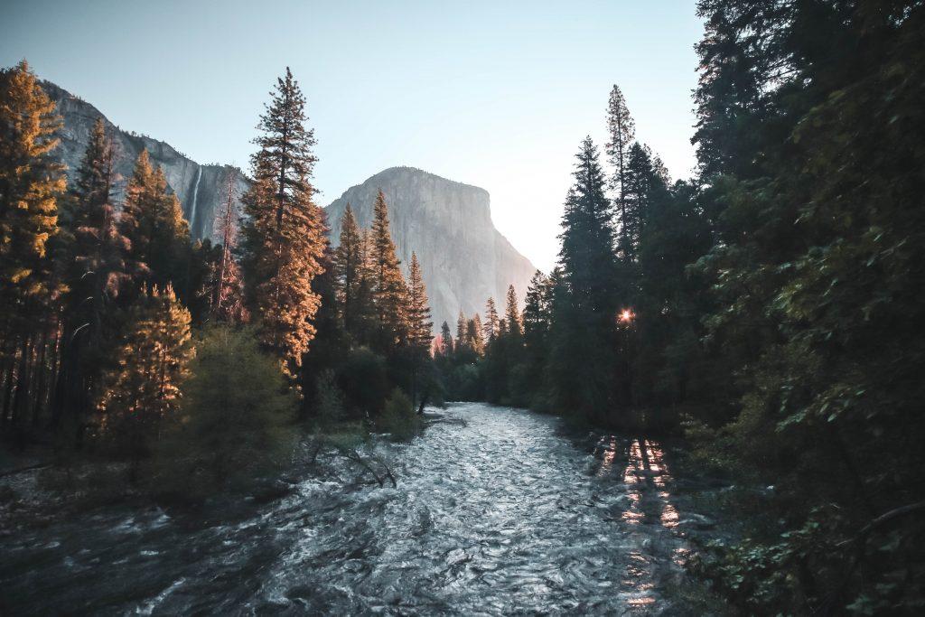 My absolute darling et les séquoia des forêts californiennes
